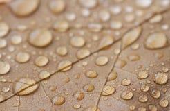 Wodne kropelki zbierać w jesień liściu obraz royalty free