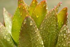 Wodne krople przy rośliną po deszczu Fotografia Royalty Free