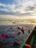 Wodne leluje w Patthalung zdjęcie royalty free
