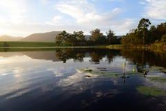 Wodne leluje z zielonymi lotosowymi liśćmi w tamie, Ogrodowa trasa, Południowa Afryka Zdjęcie Stock