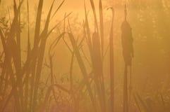 Wodne pałki wiatr Wschodów słońca ziarna niosący słońcem Zdjęcia Stock