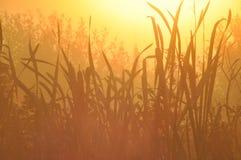 Wodne pałki Wiatr Ziarna niosący słońcem Zdjęcia Royalty Free