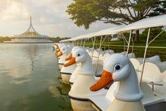 Wodne rower kaczki łodzie parkować na jeziorze w ciemniutkim parku zdjęcia royalty free