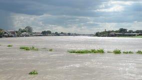 Wodnego hiacyntu pokrywa rzeka w Tajlandia zbiory