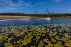 Wodnego narciarstwa Męski Łódkowaty Sceniczny krajobraz Obrazy Stock