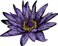Wodnej lelui kwiat Obrazy Stock