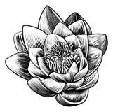 Wodnej lelui Lotosowego kwiatu rocznika Woodcut Grawerująca akwaforta ilustracja wektor