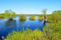 Wodnej wiosny krajobraz - stojąca woda rzeczna Volkhov i riparian drzewa zalewający z wodą rzeczną w ładnej wiosny pogodzie zdjęcie royalty free