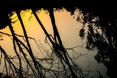Wodni odbić drzewa, słońce i Obraz Royalty Free