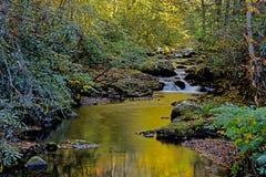 Wodni odbicia w małym strumieniu w Smokies Obrazy Royalty Free