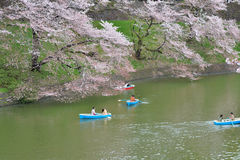 Wodniactwo podczas wiosna sezonu przy Tokio Obrazy Royalty Free