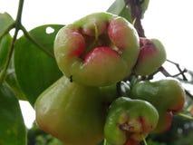 Wodny Apple Fotografia Royalty Free