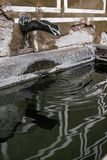 Wodny czopek w Złotym pasie ruchu zdjęcia stock