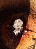 Wodny diament zdjęcie royalty free