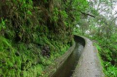 Wodny irygacyjny kanał, nazwany levada i footpath dla chodzić blisko go, w Folhadal, mgłowego las, blisko Encumeada, madery isla fotografia royalty free