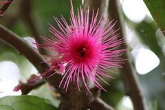 Wodny jabłczany kwiat Zdjęcie Stock