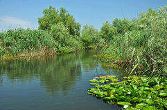 Wodny kanał w Danube delcie Fotografia Stock