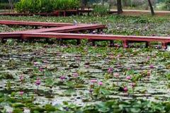 Wodny Lilly park obraz stock