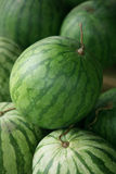 Wodny melon zdjęcia royalty free