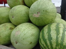 Wodny melon Zdjęcie Stock
