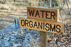 Wodny organizmu znak Zdjęcie Stock