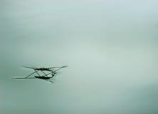 Wodny pająk lub stawowa łyżwiarka Fotografia Stock