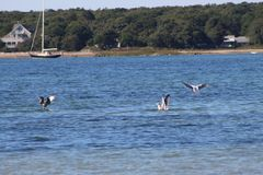 Wodny plażowy widok Fotografia Stock