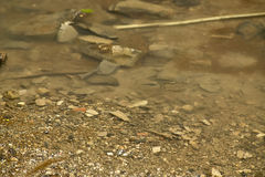 Wodny pluśnięcie Fotografia Stock