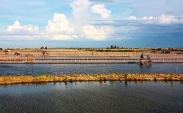 Wodny pole przy Vietnam Fotografia Stock