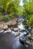 Wodny przepływ przez lasu Obraz Stock