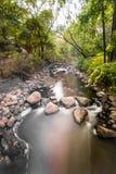 Wodny przepływ przez lasu Zdjęcie Royalty Free