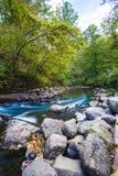 Wodny przepływ przez lasu Zdjęcia Royalty Free