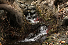 Wodny przepływ w drewnach Fotografia Stock