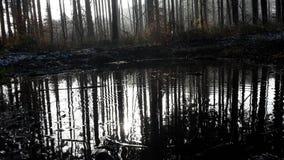 Wodny Reflexion Zdjęcia Stock