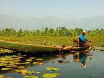 Wodny rolnictwo Fotografia Stock