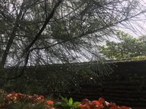 Wodny spadać od drzewnego liścia zdjęcia stock