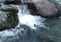 Wodny spadek Zdjęcie Stock
