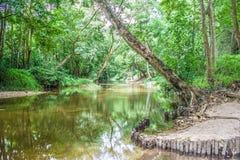 Wodny strumień lub rzeczny spływanie przez zielonego lasu Fotografia Stock