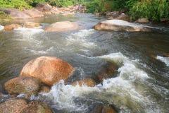 Wodny strumień w lesie Obrazy Stock