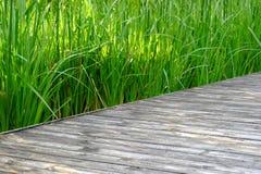 Wodny trawy dorośnięcie w bagnie z ciepłym światłem fotografia stock
