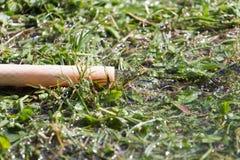 Wodny wąż elastyczny w trawę Zdjęcia Stock