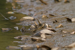 Wodny wąż na rzece Zdjęcie Stock