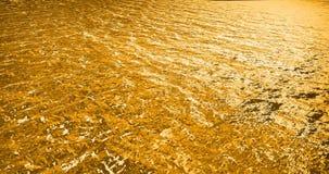 Wodny złoty a zdjęcie wideo