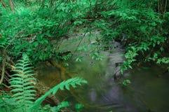 Wodny zatoczka krzaków paproci las Zdjęcia Stock
