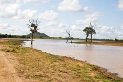 Wodopój, Południowa Afryka Zdjęcie Stock