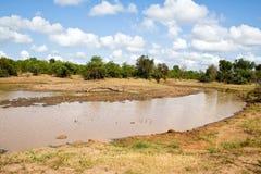 Wodopój, Południowa Afryka Fotografia Stock