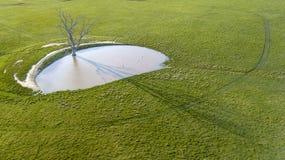 Wodopój z nieżywym drzewem fotografia stock