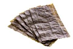 wodorosty odizolowana Obraz Stock