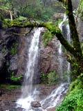 wodospad drzew zdjęcie royalty free