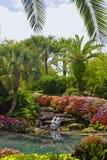 wodospad krajobrazowa obraz royalty free